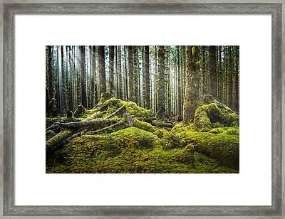 Hoh Rainforest Log Jam Framed Print by Dan Mihai