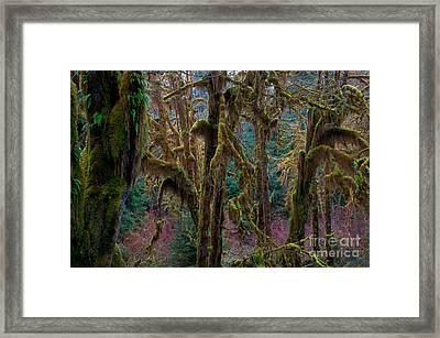 Hoh Rainforest, Olympic National Park Framed Print by Mark Newman