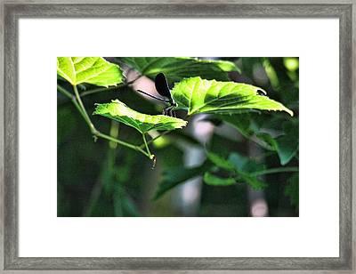 Hojack Trail Webster Ny Framed Print