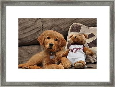 Hokie Fan Framed Print by Todd Hostetter