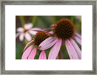 Hold Me Close Framed Print