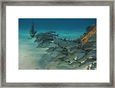 Hold On Boys What Do We Have Here Framed Print by Halifax Photography John Malone