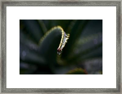 Framed Print featuring the photograph Hold On by Nadalyn Larsen