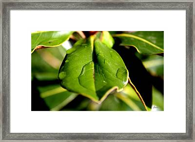 Hold Onto Me Framed Print by Amanda Holmes Tzafrir