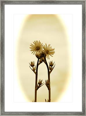 Holding On Framed Print by Andrea Dale