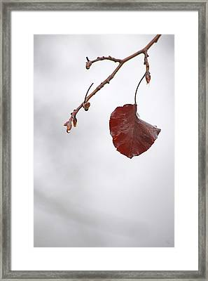 Holding On Framed Print by Karol Livote