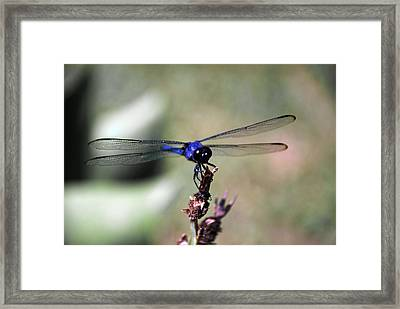 Holding On Framed Print by Linda Segerson