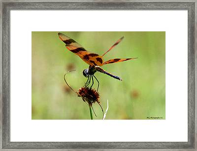 Holding On  Framed Print