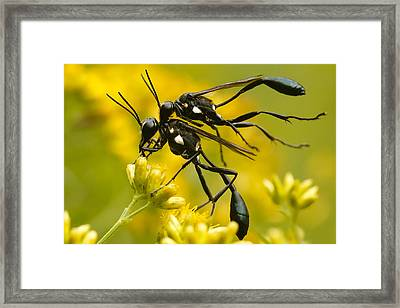 Holding On Framed Print by Shane Holsclaw