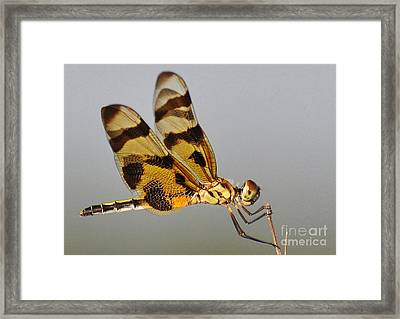 Holding On Tightly Framed Print by Kathy Baccari