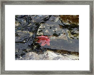 Holding Still Framed Print by KD Johnson