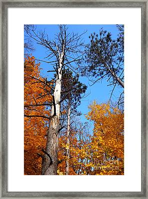 Holding Strong Framed Print by Jacqueline Athmann