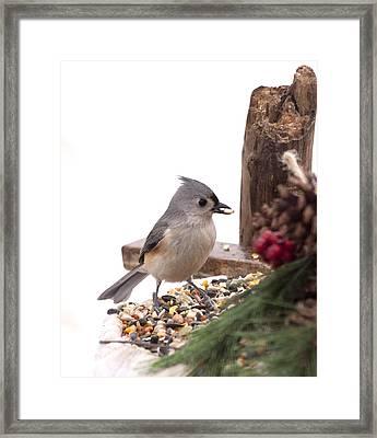 Holiday Bird Framed Print