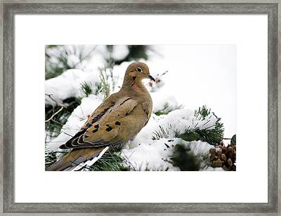 Holiday Dove Framed Print by Christina Rollo