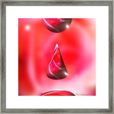 Holiday Droplet - Christmas Rose Framed Print by Anna Porter