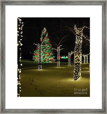 Holiday Lights At Chicago Botanic Garden Framed Print by Nancy Mueller