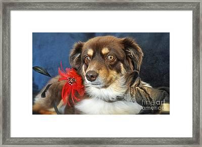 Holiday Portrait Framed Print by Gwyn Newcombe