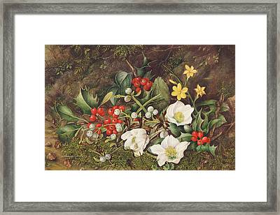 Holly And Christmas Roses Framed Print by Jane Taylor
