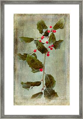 Holly Branch With Red Berries Framed Print