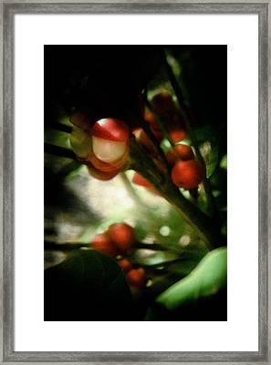 Holly From The Dark  Framed Print