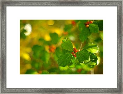 Framed Print featuring the photograph Holly In The Wood by Suzanne Powers