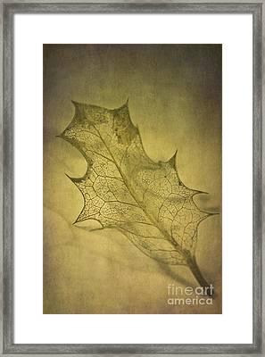 Holly Leaf Framed Print by Jan Bickerton