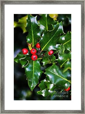 Framed Print featuring the photograph Holly by Mindy Bench