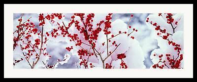Frozen Branches Framed Prints