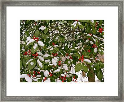 Holly - Winter Framed Print