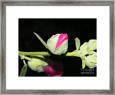 Framed Print featuring the photograph Hollyhock Buds by Ann E Robson