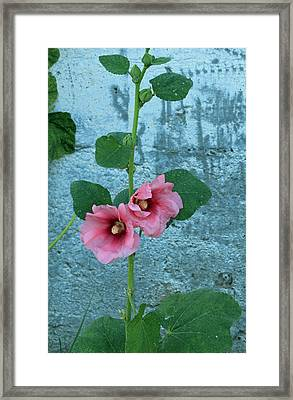 Framed Print featuring the photograph Hollyhock by E Faithe Lester