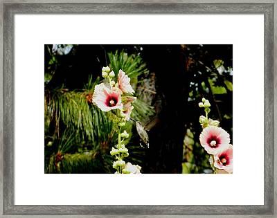 Hollyhock Heaven Framed Print