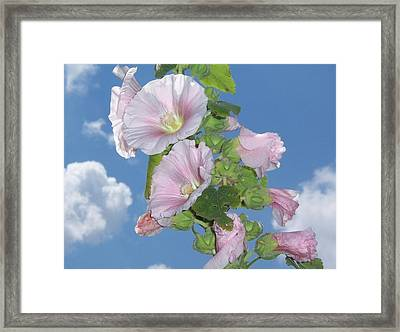 Framed Print featuring the photograph Hollyhock by John Mathews