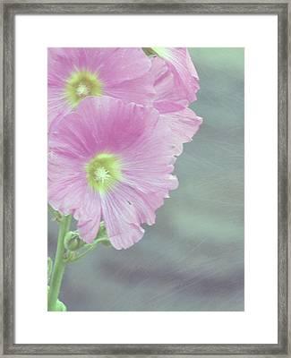 Hollyhock Framed Print by Lynn Bolt