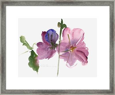 Hollyhocks Framed Print by Claudia Hutchins-Puechavy