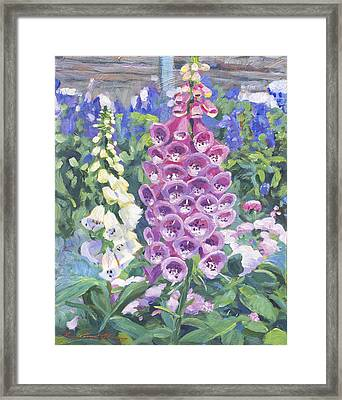 Foxglove Framed Print by David Lloyd Glover