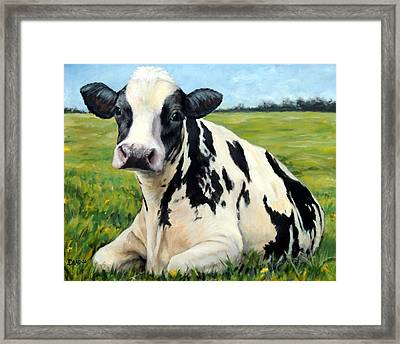 Holstein Cow Relaxing In Field Framed Print by Dottie Dracos