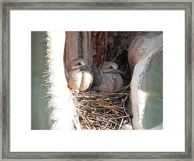 Framed Print featuring the photograph Home All Alone by Deb Halloran