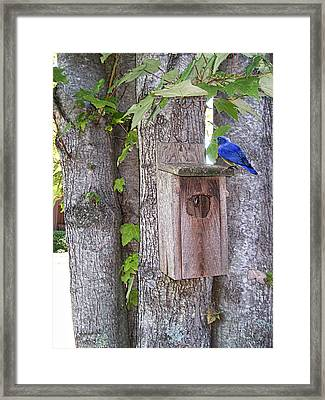 Home For Lunch Framed Print by Larry Bishop