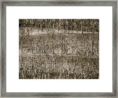 Home For Wildlife Framed Print by Q's House of Art ArtandFinePhotography