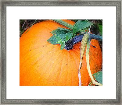 Home Grown Framed Print by Mary Beth Landis