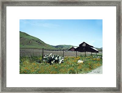 Home Home On The Range Framed Print by Barbara Snyder