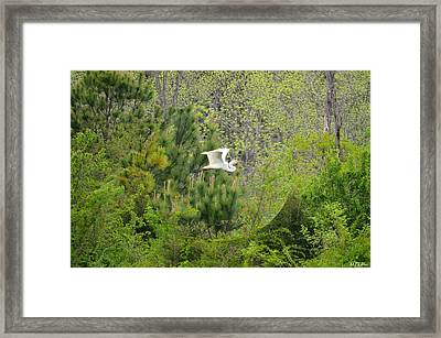 Home Of The Free Framed Print by Maria Urso