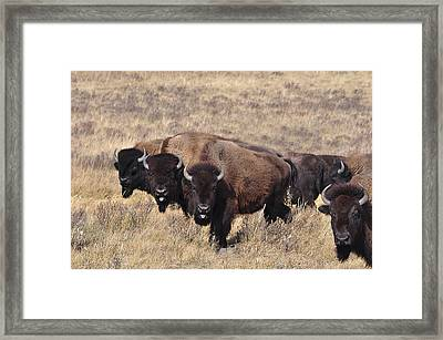Framed Print featuring the photograph Home On The Range by Fran Riley