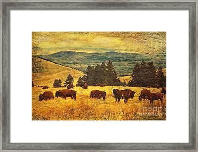 Home On The Range Framed Print by Lianne Schneider