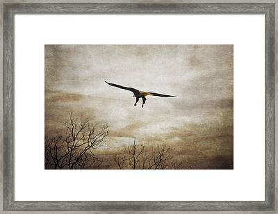 Home Safely Framed Print by Jai Johnson