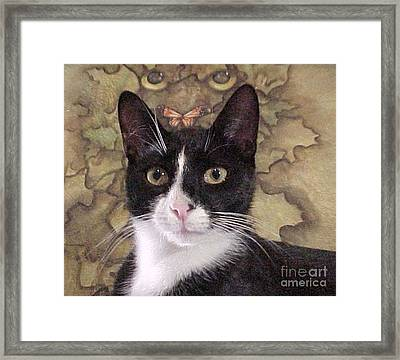 Homeless Kitty To Super Model Framed Print by Robert Stagemyer