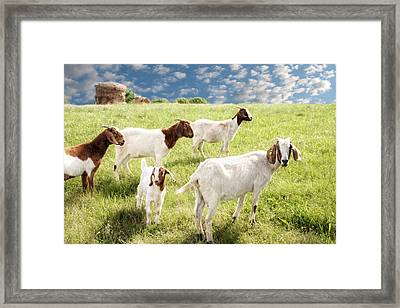Homeward Bound Framed Print by Amy Tyler
