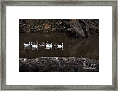 Homeward Bound Framed Print by Kaye Menner