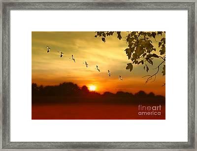 Homeward Bound Framed Print by Tom York Images